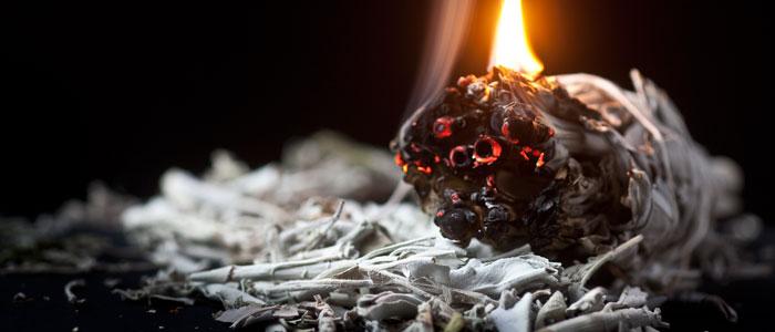 Weißer Salbei wird tratitionell zum Räuchern genutzt | Foto: Sven Nieder